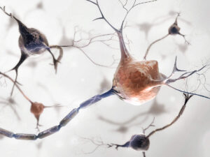 An enlarged image of nerve cells with nerve fibers, so-called axons.